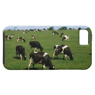 Holstein-Friesian cattle, Ireland iPhone 5 Covers