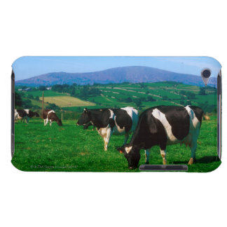 Holstein-Friesian cows near Borris, County Barely There iPod Covers