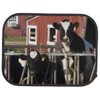 Holsteins at Boggy Meadow Farm in Walpole, New Car Mat