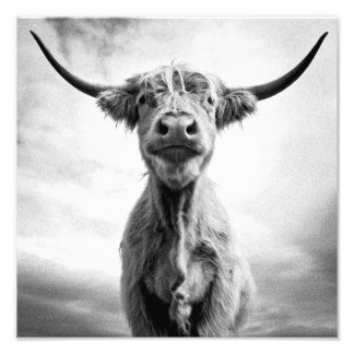 Holy Cow Mesotint Style Art Photography Photograph