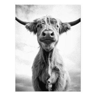 Holy Cow Mesotint Style Art Photography Photo Print