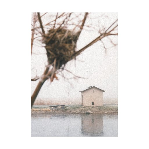 Home Bird's Nest Stretched Canvas Prints
