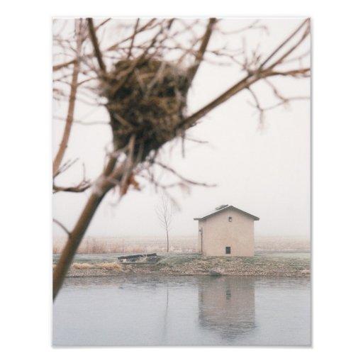 Home Bird's Nest Photograph
