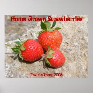 Home Grown Strawberries Print