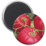 Home Grown Tomatoes 6 Cm Round Magnet