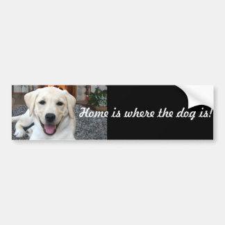 Home is where the dog is bumper sticker