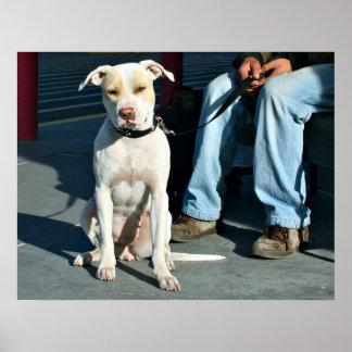 Homeless Man & Dog #2 Poster