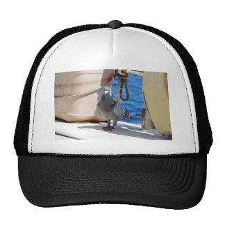 Homing Pigeon Cap