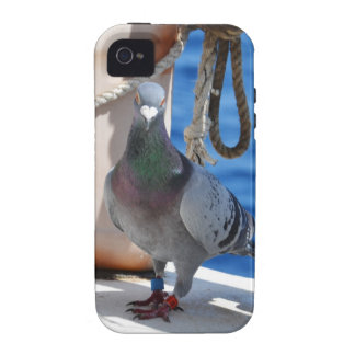 Homing Pigeon iPhone 4/4S Cover