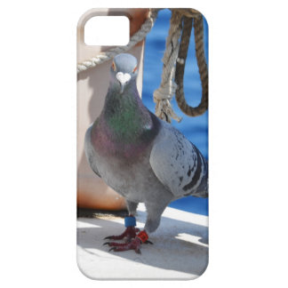 Homing Pigeon iPhone 5 Covers
