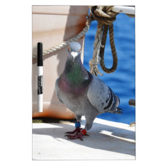 Homing Pigeon Dry Erase Whiteboards