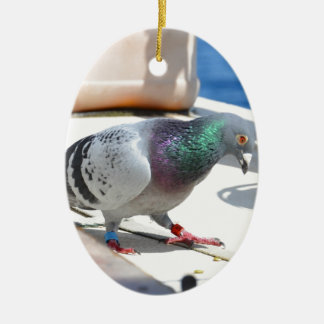 Homing Pigeon On A Yacht Ceramic Oval Decoration