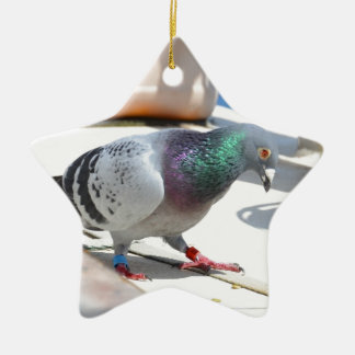 Homing Pigeon On A Yacht Ceramic Star Decoration