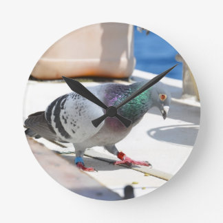 Homing Pigeon On A Yacht Clock