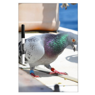 Homing Pigeon On A Yacht Dry Erase Boards