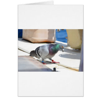 Homing Pigeon On A Yacht Greeting Card