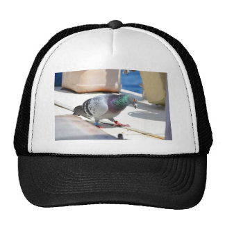 Homing Pigeon On A Yacht Hat