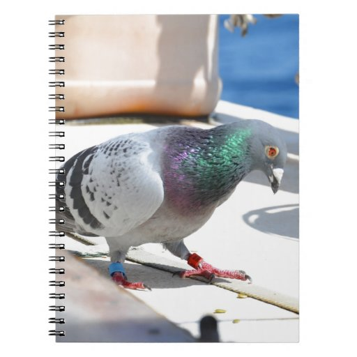 Homing Pigeon On A Yacht Notebook