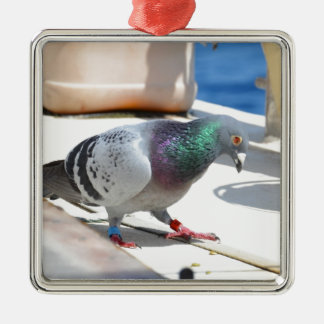 Homing Pigeon On A Yacht Silver-Colored Square Decoration