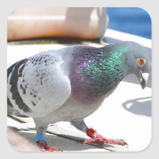 Homing Pigeon On A Yacht Square Sticker