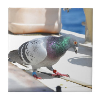 Homing Pigeon On A Yacht Small Square Tile