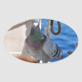 Homing Pigeon Oval Stickers