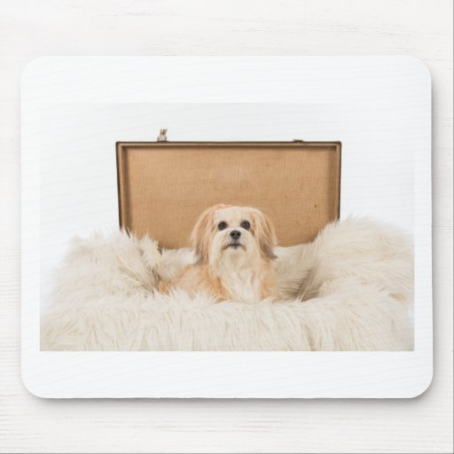 Hondje sitting in a trunk mouse pads