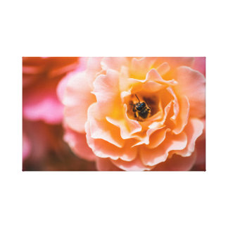 Honey Bee and Pink Rose Canvas