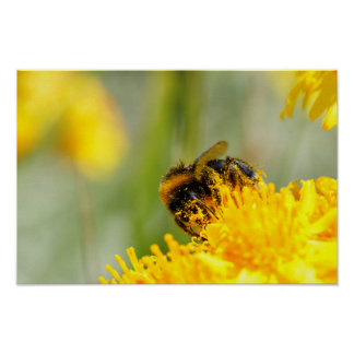 Honey bee and pollen poster