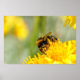 Honey bee and pollen poster