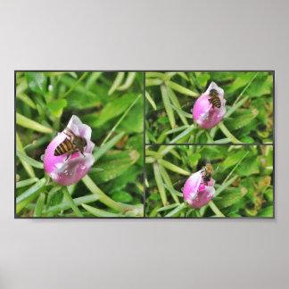 Honey Bee and Purple Flower Print