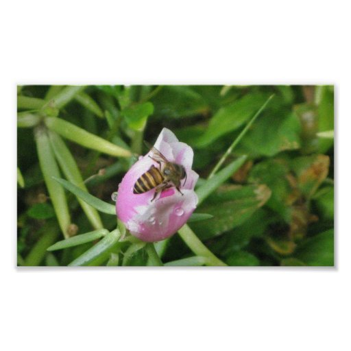 Honey Bee and Purple Flower Poster