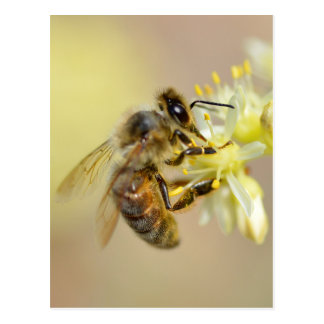 Honey bee feeding on flower postcard