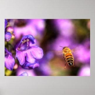 Honey Bee Flying Toward Flower Poster