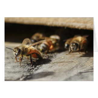 Honey Bee Leaving The Hive Greeting Card