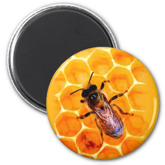 Honey bee magnet