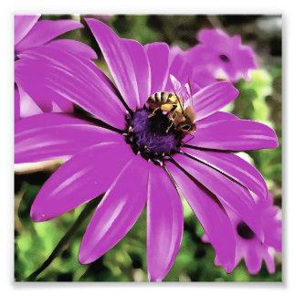 Honey Bee On A Spring Flower Art Photo