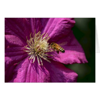 Honey bee on Clematis flower Card