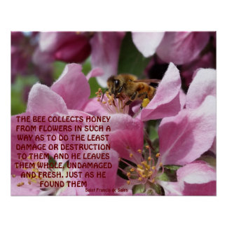 Honey Bee on Crabapple Blossom with Quote