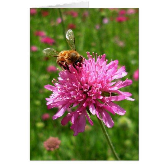 Honey bee on pink flower card
