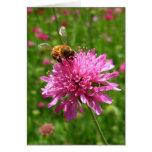 Honey bee on pink flower greeting card