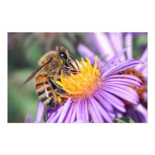 Honey Bee on Purple Pink Flower Flyer Design
