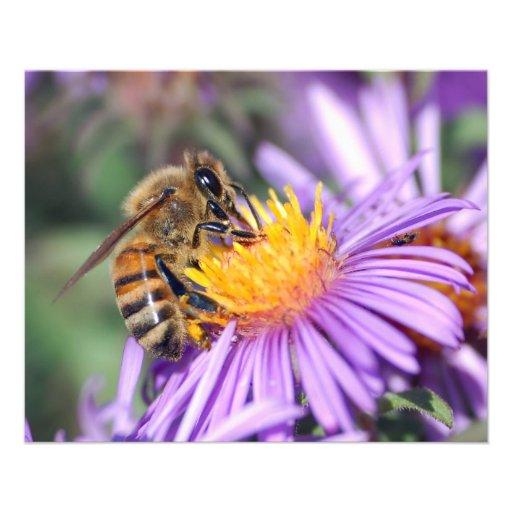 Honey Bee on Purple Pink Flower Full Color Flyer