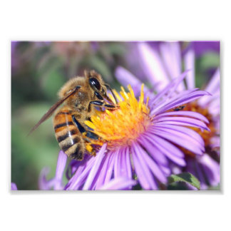 Honey Bee on Purple Pink Flower Photo Print