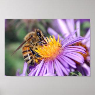 Honey Bee on Purple Pink Flower Posters