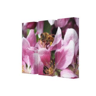 Honey Bee Pollinating Pink Crabapple Tree Blossom Canvas Print