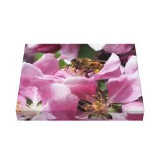 Honey Bee Pollinating Pink Crabapple Tree Blossom Canvas Prints