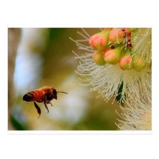 HONEY BEE RURAL QUEENSLAND AUSTRALIA POSTCARD