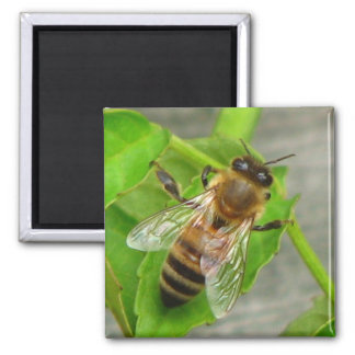 Honey Bee Square Magnet