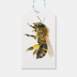 Honey Bee Watercolour Painting Artwork Print Gift Tags